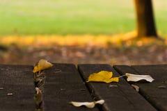 Folhas, parque, queda adiantada Fotos de Stock Royalty Free
