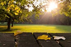 Folhas, parque, queda adiantada Imagens de Stock
