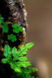 Folhas pequenas da samambaia fotos de stock