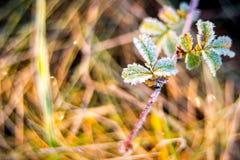 Folhas pequenas gelados Fotos de Stock Royalty Free