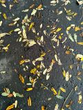 Folhas pequenas na estrada asfaltada Fotografia de Stock