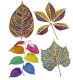 Folhas pintadas primitivo ajustadas ilustração stock