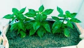 folhas por vidas Imagem de Stock Royalty Free