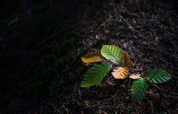 Folhas profundas da floresta Foto de Stock Royalty Free
