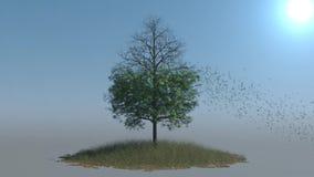 Folhas que caem fora uma árvore no sol quente video estoque