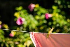 Folhas que encontram-se no sol com um fundo florido Imagens de Stock