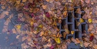 Folhas que obstruem um dreno fotografia de stock royalty free