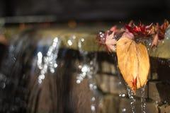 Folhas que penduram sobre fotografia de stock