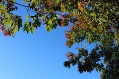 Folhas que quadro o céu Imagens de Stock