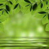 Folhas que refletem na água Imagem de Stock Royalty Free