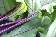 Folhas recentemente escolhidas das beterrabas Imagem de Stock Royalty Free