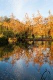 Folhas refletindo de uma queda da lagoa Imagem de Stock Royalty Free