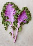 Folhas roxas do kale Fotos de Stock