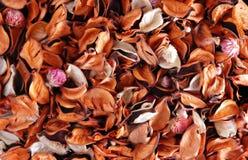 Folhas secadas fotografia de stock