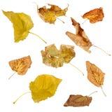 Folhas secadas Fotos de Stock Royalty Free