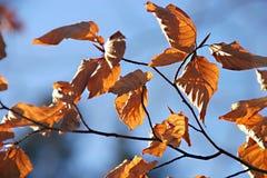 Folhas secadas imagens de stock