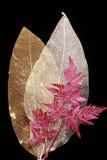 Folhas secadas Fotografia de Stock Royalty Free