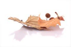 Folhas secadas imagens de stock royalty free