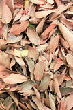 Folhas secadas Foto de Stock Royalty Free