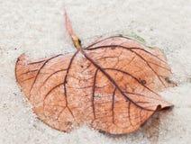 Folhas secadas caídas Imagem de Stock