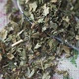 Folhas secadas da amora-preta Imagem de Stock