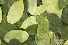 Folhas secadas da coca Fotografia de Stock