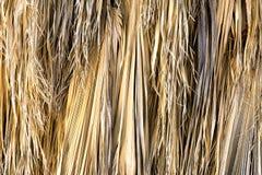 Folhas secadas da palmeira Fotos de Stock