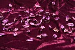 Folhas secadas de plantas de algodão Imagem de Stock