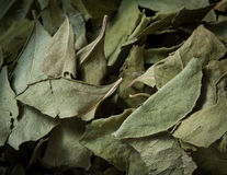 Folhas secadas do caril fotografia de stock