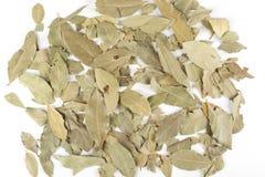 Folhas secadas do louro Imagem de Stock Royalty Free