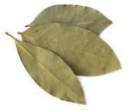 Folhas secadas do louro Fotos de Stock