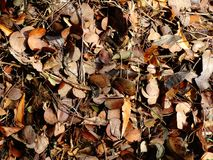 Folhas secadas na cor marrom imagens de stock