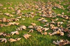 Folhas secadas na grama verde fotografia de stock royalty free