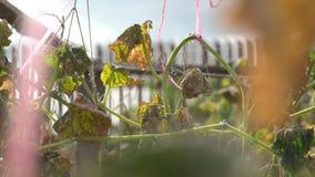 Folhas secadas no jardim no verão video estoque