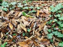 Folhas secadas outonais Foto de Stock Royalty Free