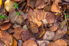 Folhas secas caídas após uma tempestade da chuva fotos de stock