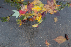 Folhas secas caídas em uma poça imagens de stock