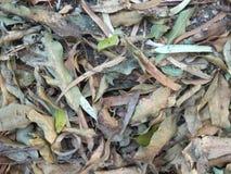 Folhas secas caídas sobre a terra fotos de stock royalty free