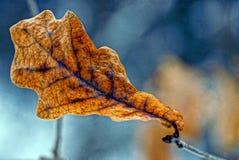 Folhas secas da framboesa no parque do outono imagens de stock