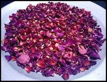 Folhas secas da rosa fotos de stock royalty free