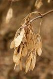 Folhas secas de Brown e de bege no outono Fotos de Stock Royalty Free