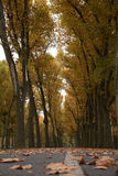 Folhas secas de Brown em uma pista do parque Foto de Stock Royalty Free
