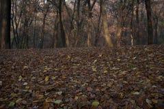 Folhas secas de cor castanha que cobrem o gramado do parque foto de stock royalty free