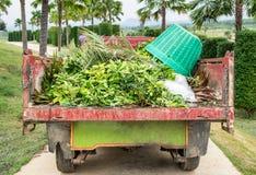 Folhas secas de limpeza com a cesta no jardim no caminhão Imagem de Stock