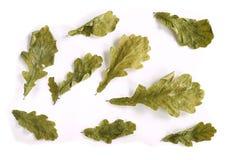 Folhas secas do carvalho em um fundo branco Imagens de Stock Royalty Free