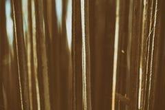 Folhas secas do coco imagem de stock