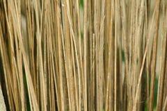 Folhas secas do coco fotos de stock royalty free