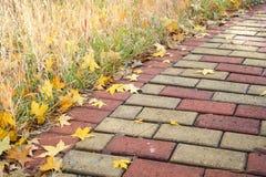 Folhas secas do outono Foto de Stock Royalty Free