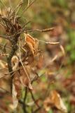 Folhas secas do outono Imagens de Stock