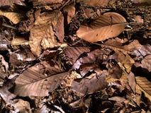Folhas secas do outono do close up Fotografia de Stock Royalty Free